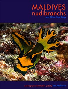 Maldives Nudibranchs